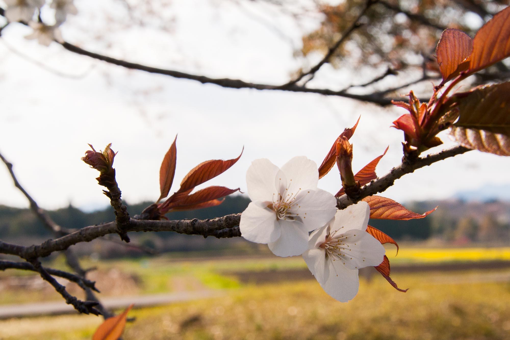 Spring 009
