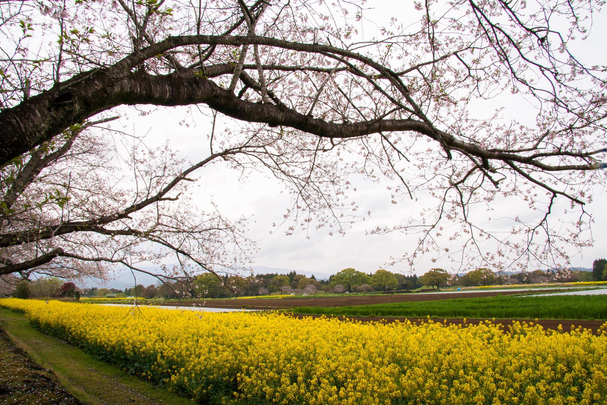 Spring 027