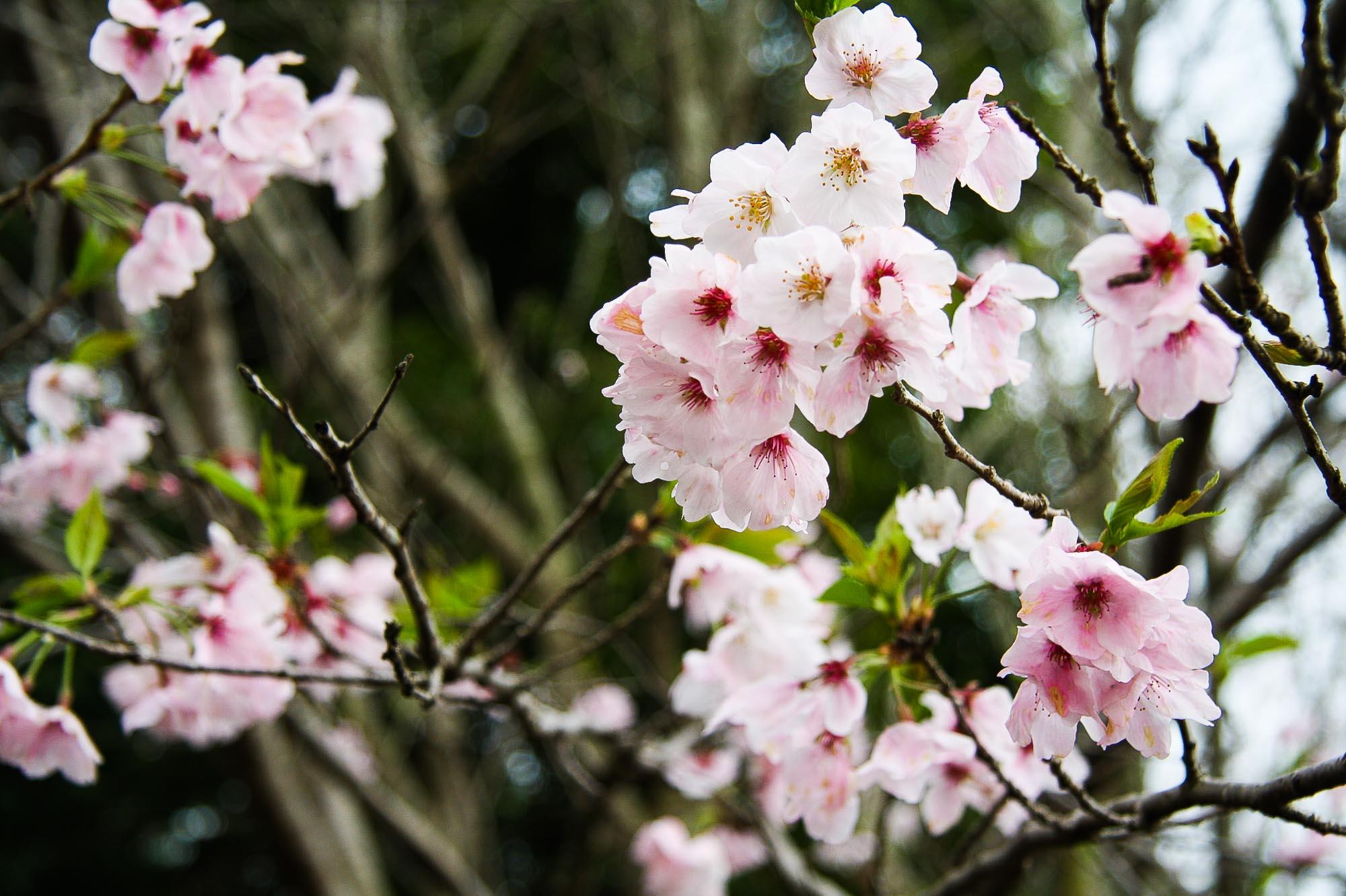 Spring 095