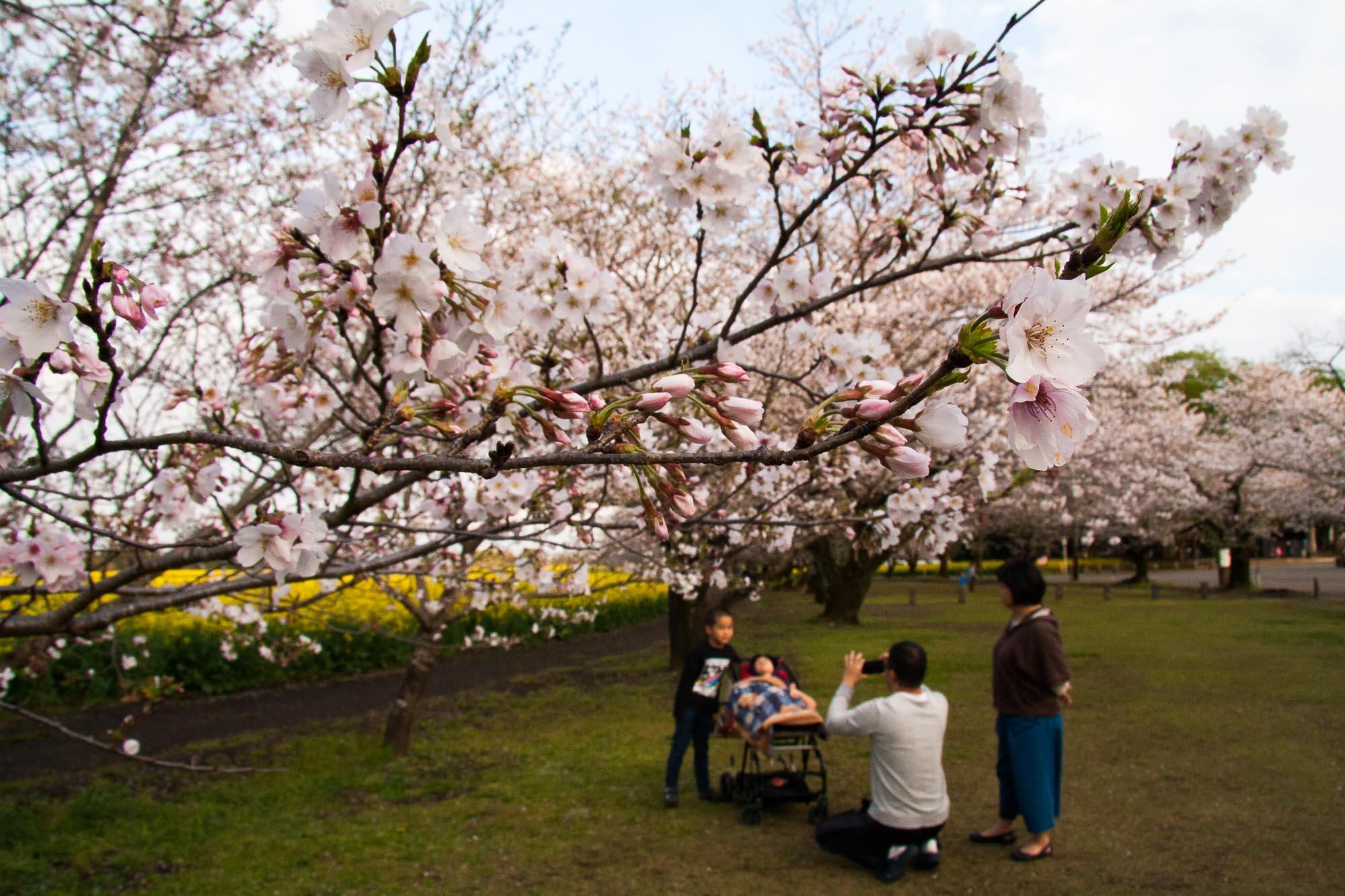 Toshiyuki Kuroki Garden 082