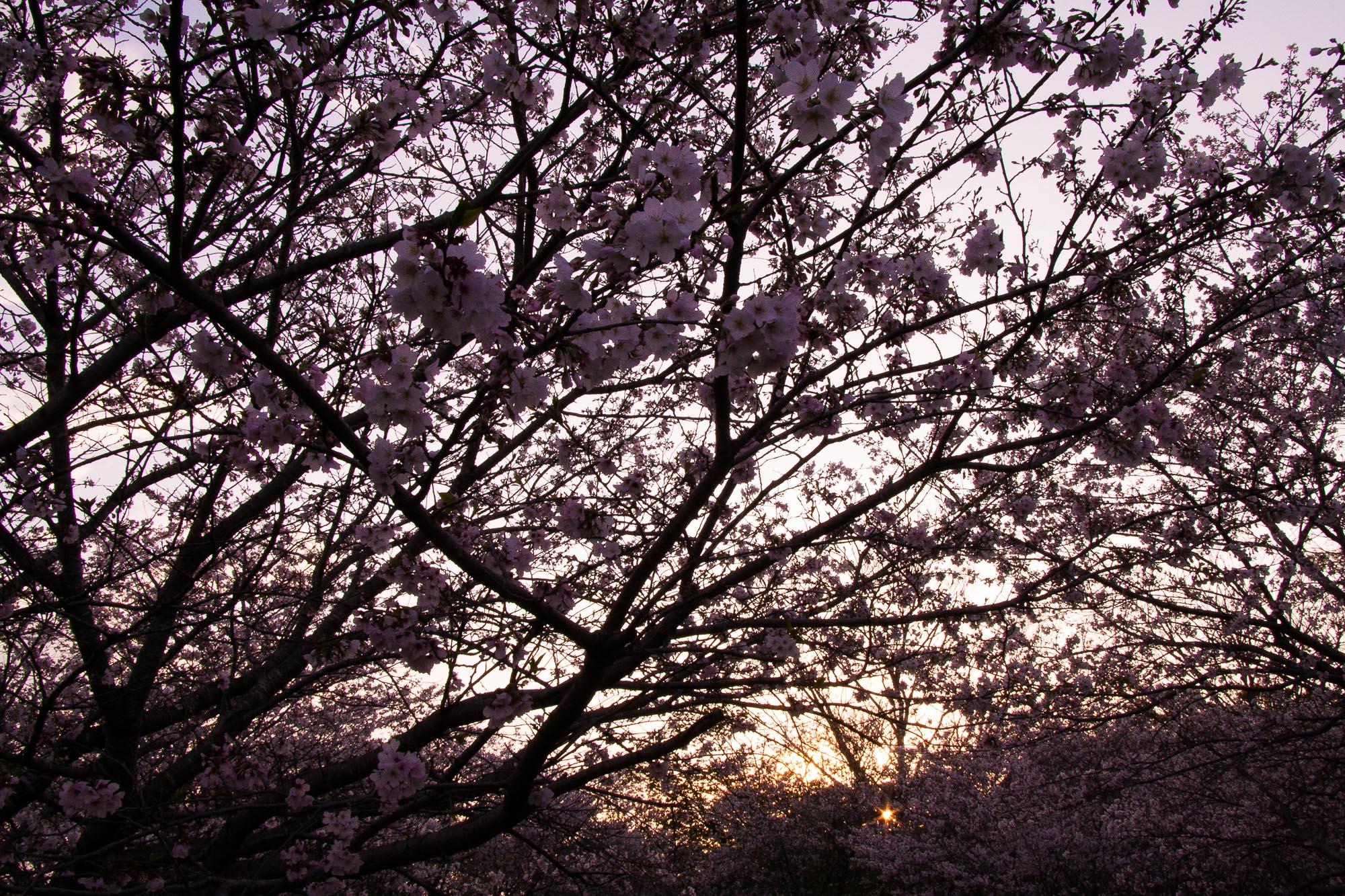 Toshiyuki Kuroki Garden 109